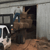 loading hay into barn